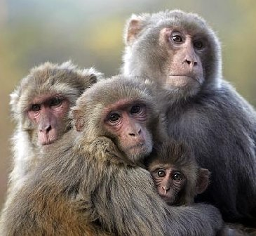 Huddled-monkeys