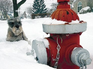 Dog-fireplug