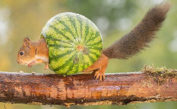1-aaa-squirrel-snail