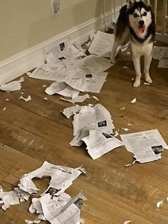1-a-dog-ate-homework
